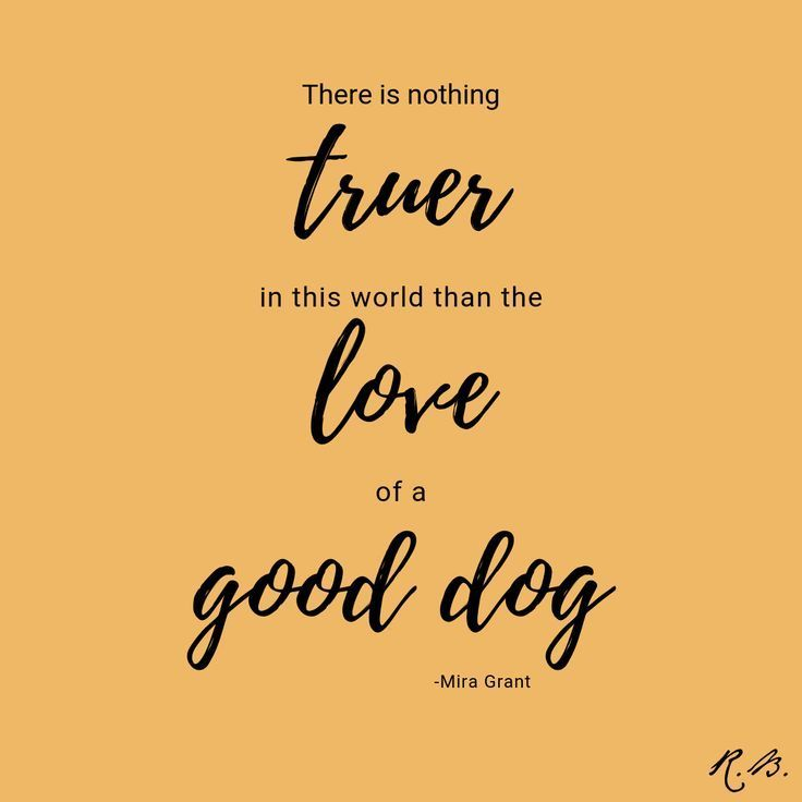 Truth Minipet Online Pet Boutique Is A Melbourne Based For Small Dogs Cats And Th Personalized Dog Collars Online Pet Boutique Online Pet Supplies