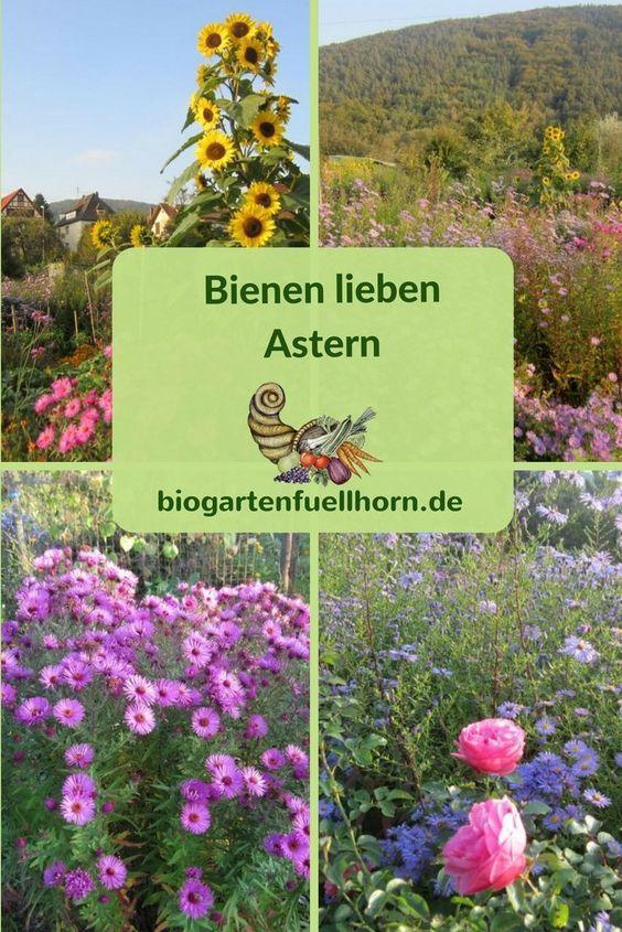 Bienen Lieben Astern Bienenfreundlicher Garten Garten Pflanzen Und Bienenfreundliche Pflanzen