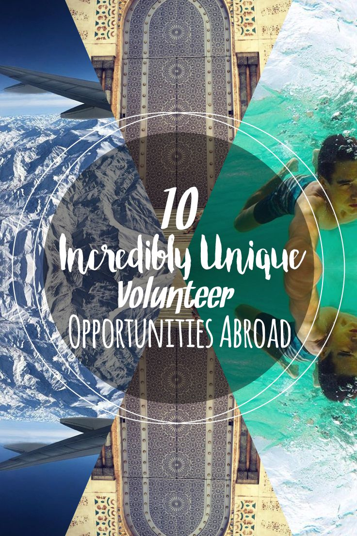 10 Incredibly Unique Volunteer Opportunities Abroad: Don't settle for the ordinary when you're extraordinary! Think Wolf Conservation in Portugal, Surf Outreach in South Africa, save the Amazonian jungle in Peru, or dive into the vibrant waters of Madagascar! #neverstopexploring #justgo Volunteer in South Africa, Madagascar, Portugal, Sri Lanka, Nepal, Victoria Falls, Morocco, Peru, Kenya, Costa Rica and Guatemala.