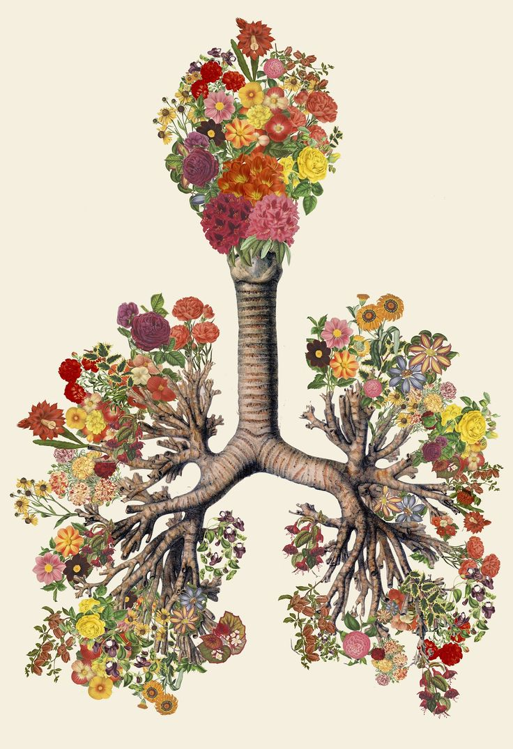 Travis Bedel creates stunning mixed media collages that merge anatomical imagery with illustrations from science guides and textbooks.