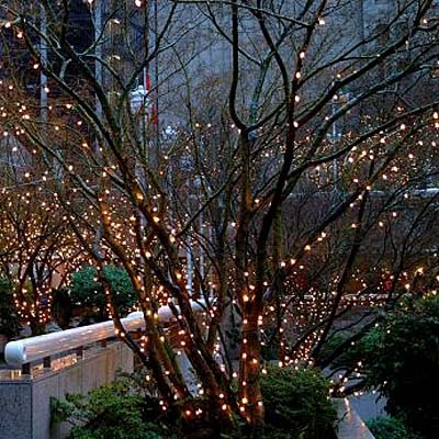 Lights in tree.....makes me smile!