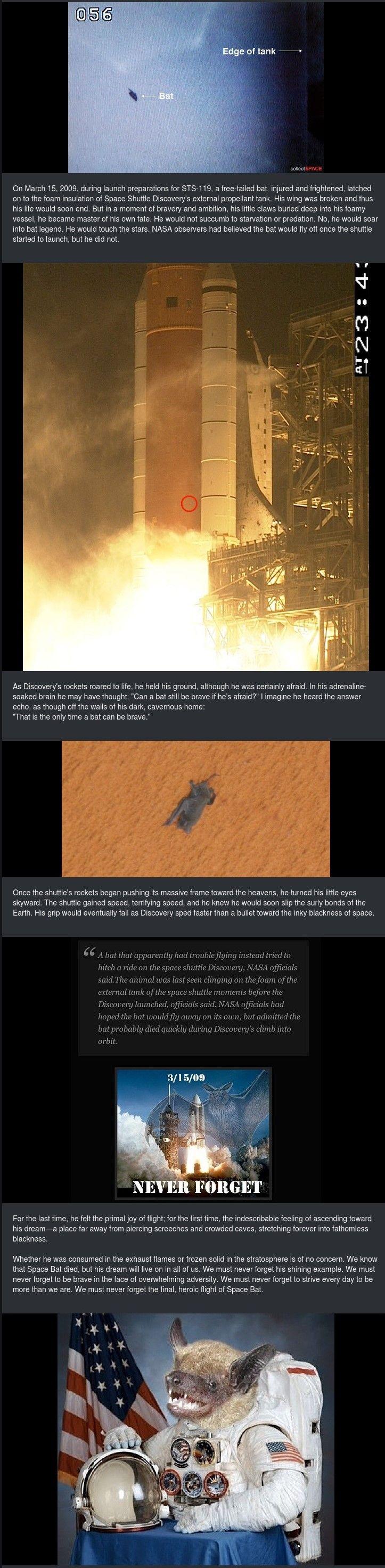 Spacebat!