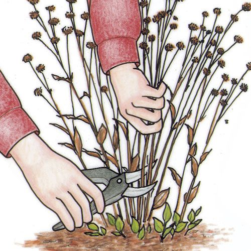 This site has information about pruning, dividing bulbs, etc.  Spring check list