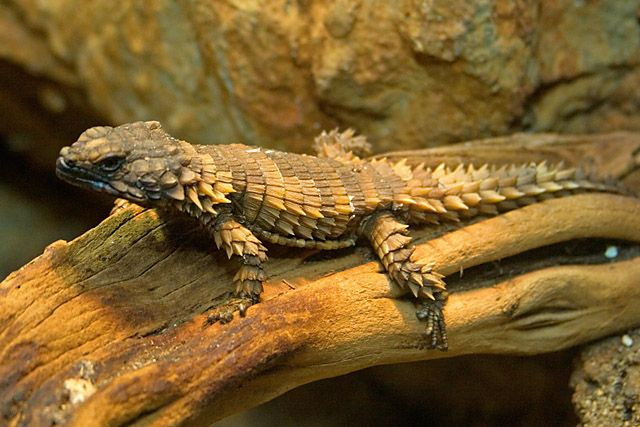 110 best images about Dragon on Pinterest | Cats, Bats and ...