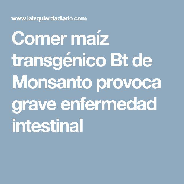 Comer maíz transgénico Bt de Monsanto provoca grave enfermedad intestinal