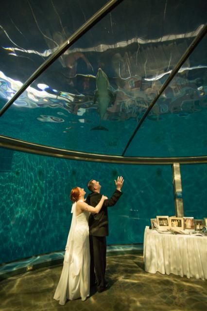 How Magical To Be With Your New Spouse And Have A Dolphin Swim Overhead