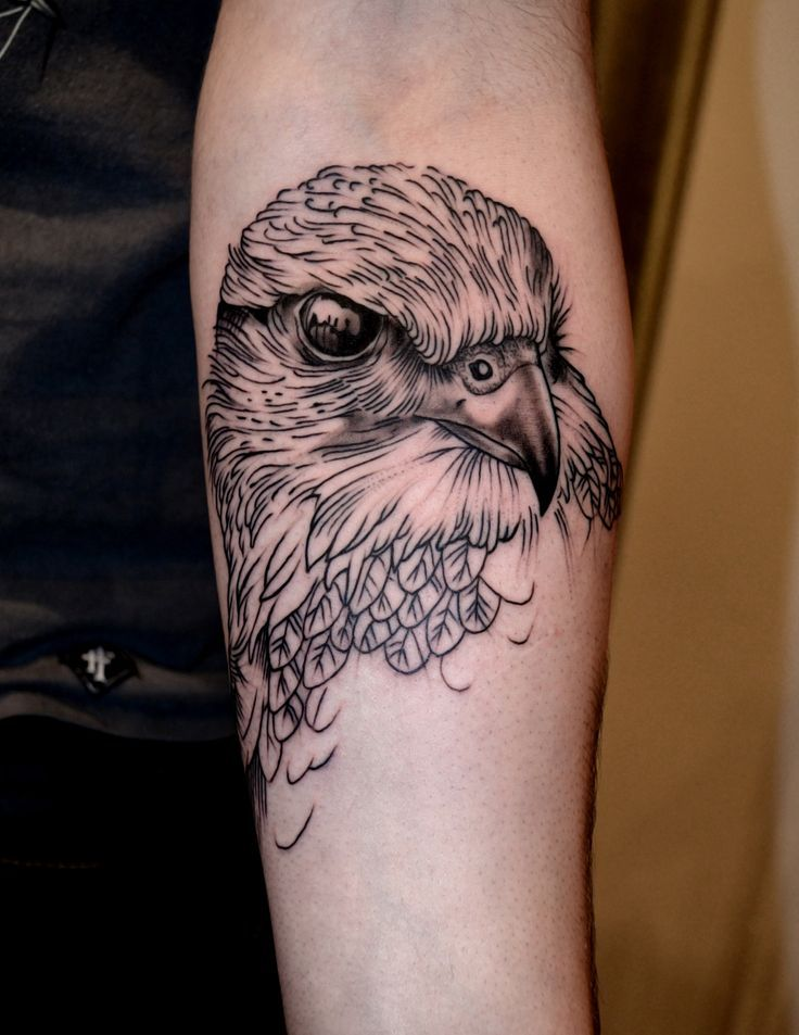 Download Free ... about Falcon Tattoo on Pinterest | Tattoos Hawk tattoo and War tattoo to use and take to your artist.