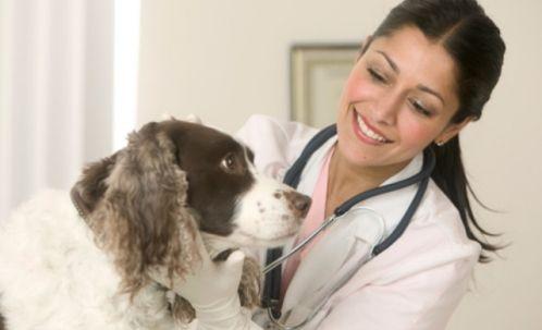 Reino Unido Utilizará perros para detectar el cancer
