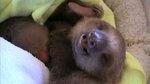 amazing sloth video! So cute!!!