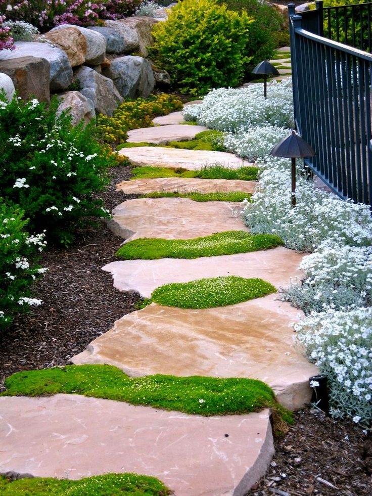 The 10 best plants and groundcover for garden paths and tread plates