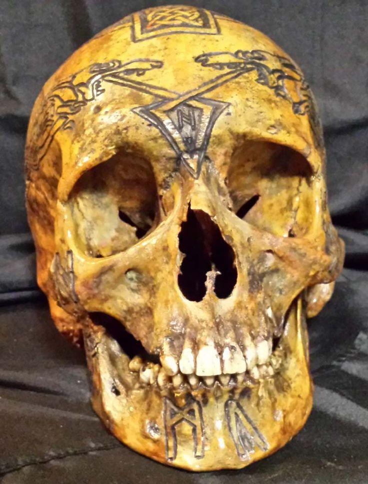 Best real human skull ideas on pinterest