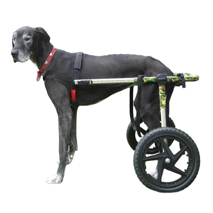 Dog Wheelchair Camo For Large Dogs 70 180 Lbs By Walkin Wheels Dog Wheelchair Diy Dog Wheelchair Dogs