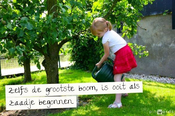 Zelfs de grootste boom, is ooit als zaadje begonnen #ECOstyle #citaten #spreuken