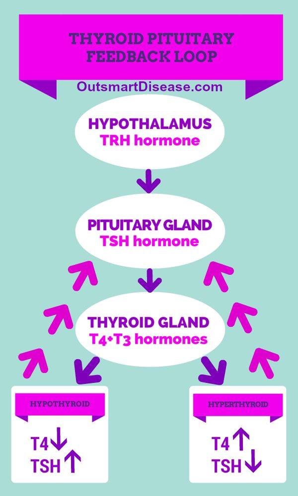 Thyroid pituitary feedback loop is a response mechanism when your body reacts to too low or too high levels of your thyroid hormones. It sends signal to produce TSH hormone to stimulate your thyroid gland to produce the right amount of T3 and T4 to achieve balance http://outsmartdisease.com/thyroid-tsh-levels