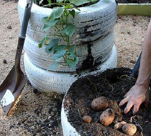 Így ültess függőlegesen zöldségeket! Mutatunk néhány remek ötletet! - Bidista.com - A TippLista!
