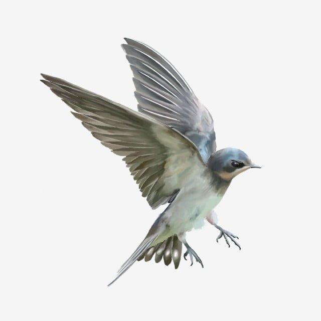 Cute Vivid Flying Bird Cute Bird Flying Bird Bird Png Transparent Clipart Image And Psd File For Free Download Birds Flying Cute Birds Flying Bird Silhouette