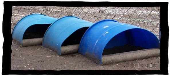 Muscovy duck nestbox.  We have a bunch of these blue barrels.  Great way to use some up.