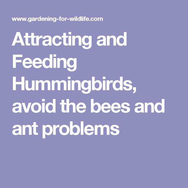 Attracting and Feeding Hummingbirds, avoid the bees and ant problems