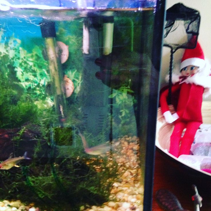 Sparkle the elf on the shelf drawing plants on the fish tank with window pens 2016