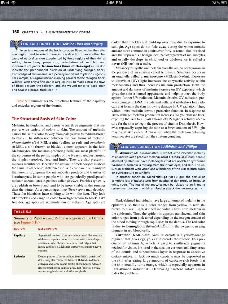Mejores 31 imágenes de Chapter 5, The Integumentary System en ...