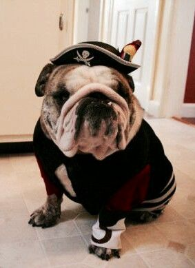 17 best images about funny bulldogs 39 costumes on. Black Bedroom Furniture Sets. Home Design Ideas