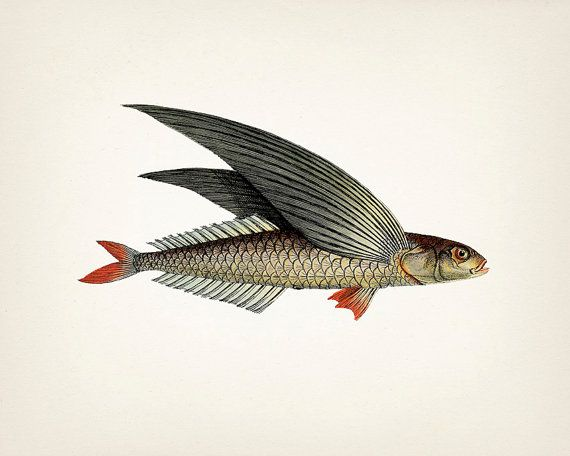 1000 ideas about fish drawings on pinterest fish sketch for Flying fish drawing