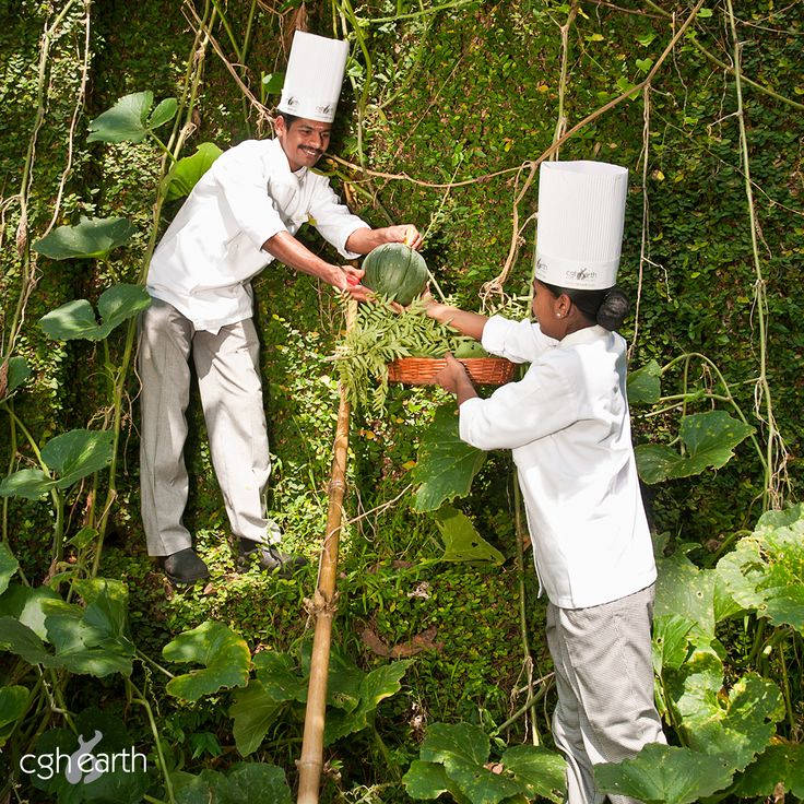 Chefs at work on the organic farm at Spice Village eco resort, Thekkady.