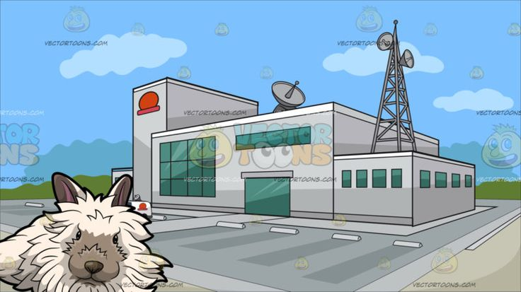A Furry White Rabbit With Outside A Tv Station Background :  A bunny with shaggy white fur grayish ears and nose sitting on the floor looking straight ahead and A building with light gray exterior walls a huge parking area antennas and satellites green glass windows and a red logo situated on an open area and surrounded by green trees in the background with blue sky