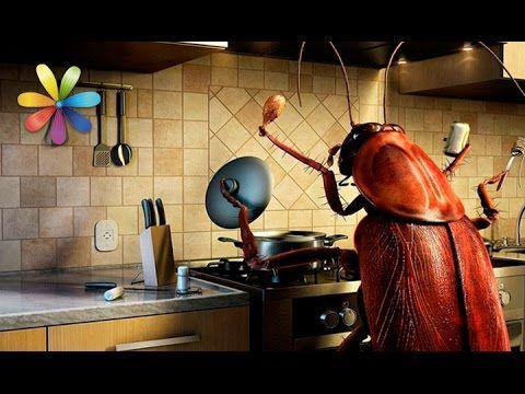 Как избавиться от тараканов навсегда? – Все буде добре. Выпуск 906 от 1....