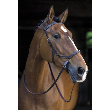 Micklem Multibridle.  Your horse can have 3 different bitless bridles AND 2 ways to wear a bit if needed.  Want this.