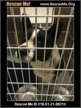 ― Illinois Border Collie Rescue ― ADOPTIONS ― RescueMe.Org