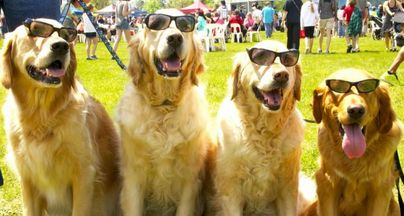 Which Dog Breed Are You At A Party? | Talent Hounds
