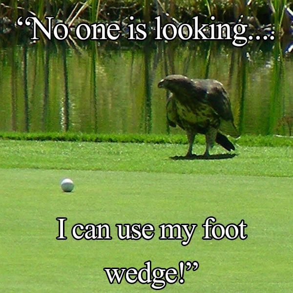 "The Eagle Has Landed Quote: Golden #Eagle Uses His ""Foot Wedge"", LOL! #Golf #Humor"