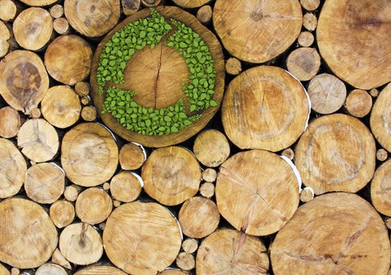 Transportation fuels from woody biomass promising way to reduce emissions | UW Today
