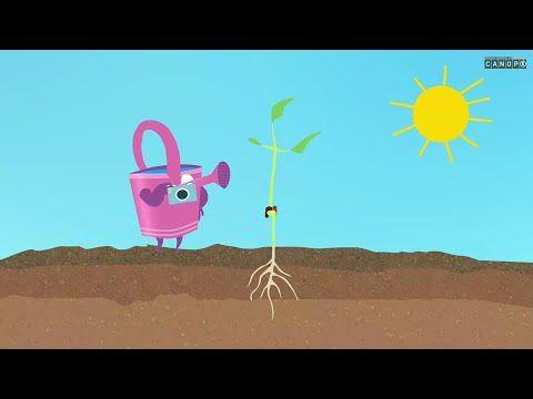 Le cycle de vie des végétaux - YouTube