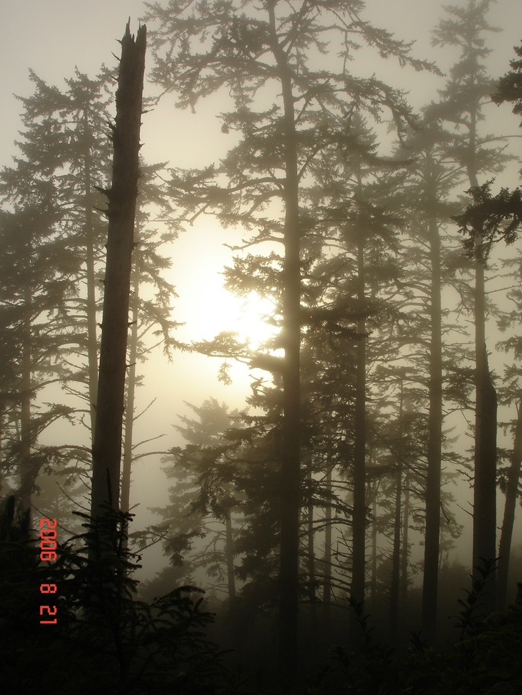 Ghost trees in Pacific Rim Natl Park, vancouver island BC