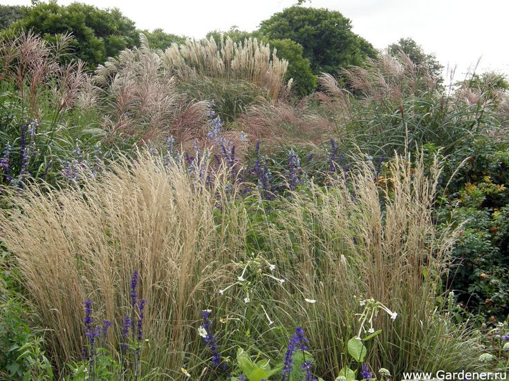 Arboretum Ellerhoop-Thiensen | Ландшафтный дизайн садов и парков
