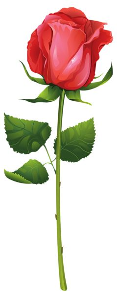 Rose with Stem PNG Clip Art Image