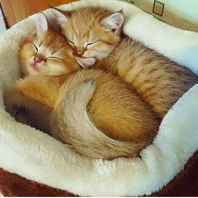 Kittens Sleeping Cats And Kittens Cute Baby Animals Kittens