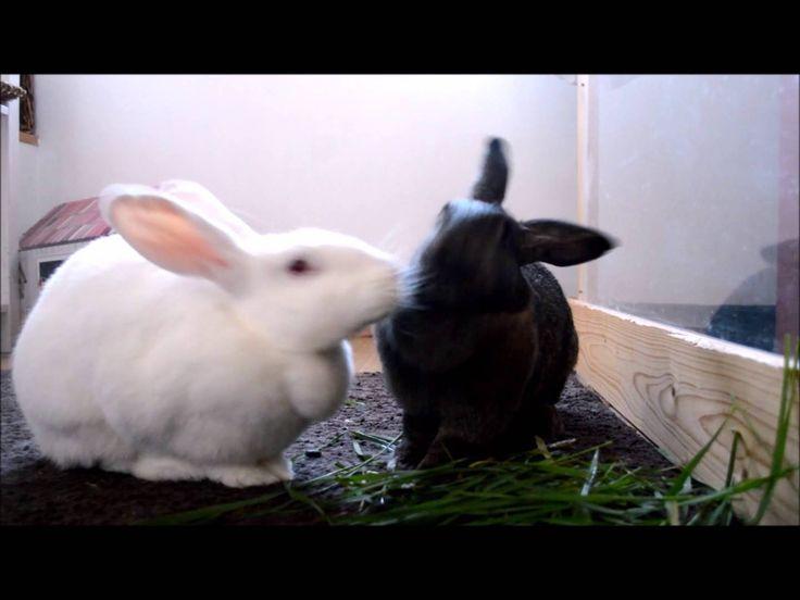 Les végétaux frais dans l'alimentation du lapin 2 - Vidéo Association Marguerite & Cie