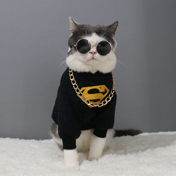 Pet Equipment Cat Canine Sun shades UV Solar Glasses Eye Safety Put on Random Coloration Trip Halloween Cool And Trend