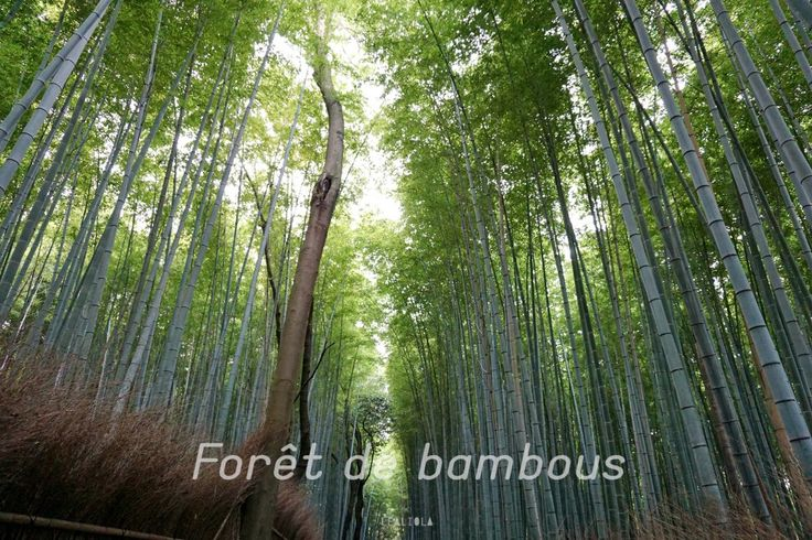 lealiola-kyoto-cityguide-bambou-forest