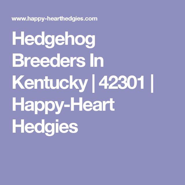 Hedgehog Breeders In Kentucky | 42301 | Happy-Heart Hedgies