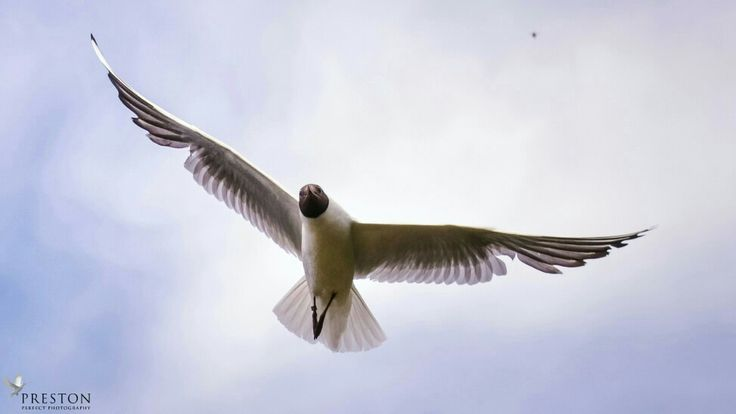 The London seagull