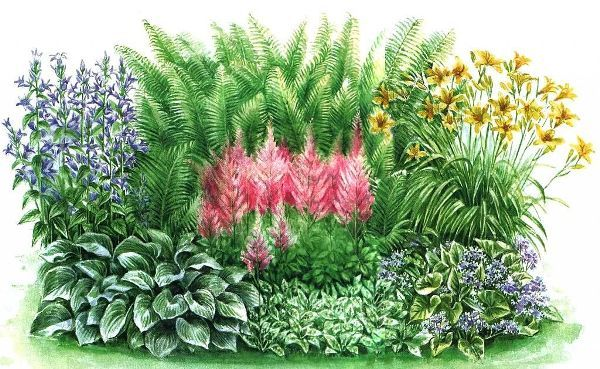 На каждом садовом участке есть тенистые уголки. Чтобы такие уголки не пустовали, посадите цветы растущие в тени. Самые неприхотливые цветы для тени и полутени
