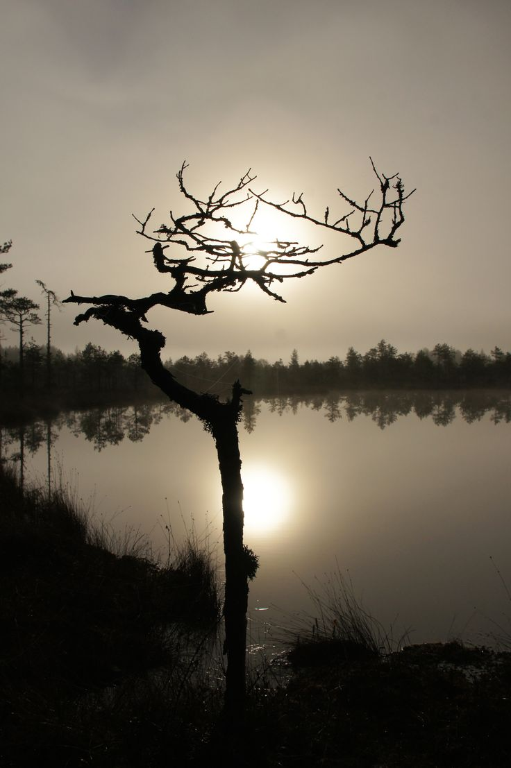 Sumuaamu suolla, Leivonmäki, Finland