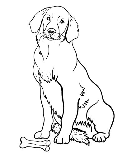Printable Golden Retriever Coloring Page Free PDF