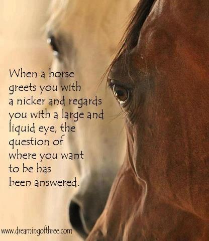 Cuando un caballo te saluda con un relincho y te mira, la pregunta de dónde quieres estar ha sido contestada