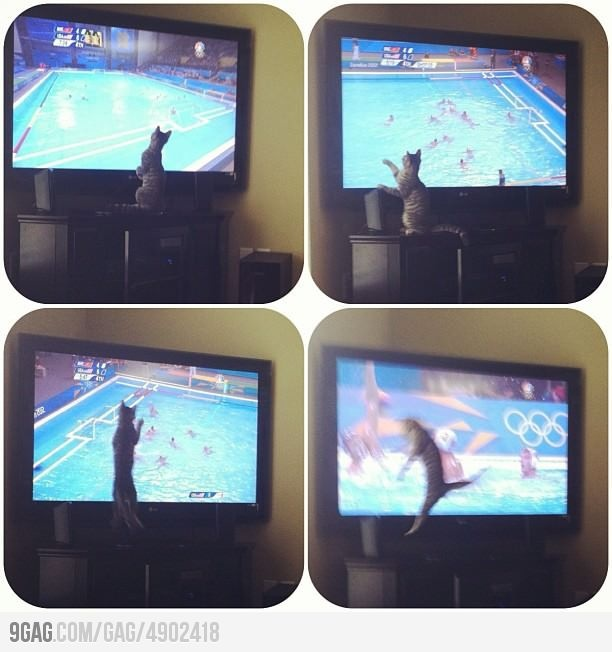 cat watching Olympic Water Polo