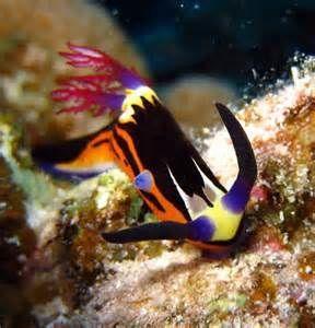 Las 25 mejores ideas sobre peces ex ticos en pinterest for Los mejores peces de agua fria